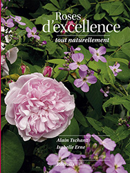 boutique image roses d'excellence